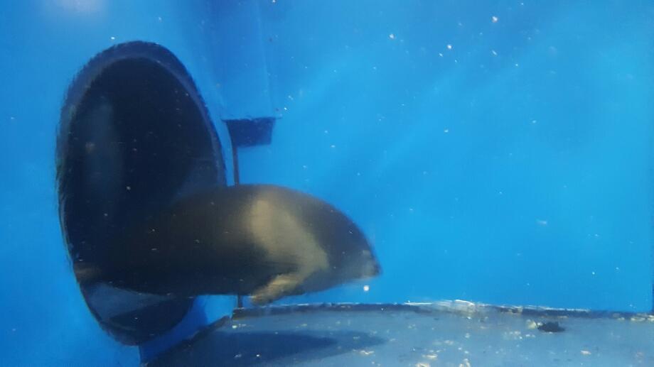O tanti ghid spunea că e un mister cum au ajuns focile în Baikal. Dar da, sunt foci în Baikal