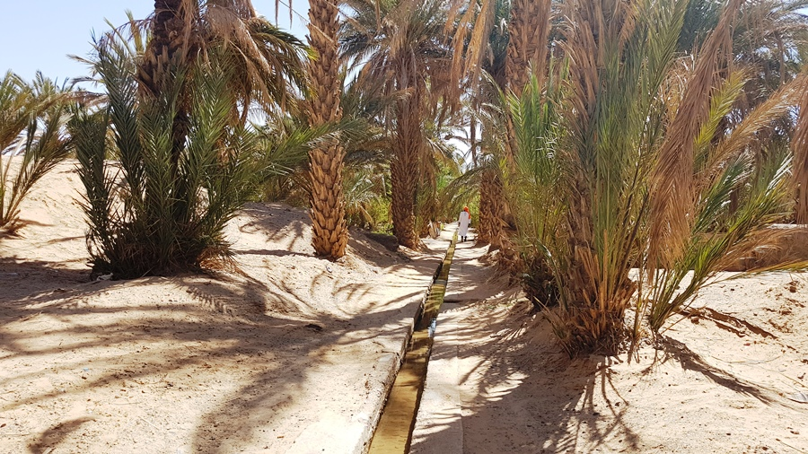 În centru curge apă, stânga și dreapta sunt grădinile oamenilor